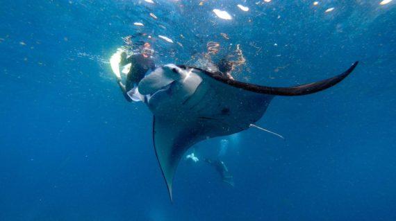 Nusa Lembongan Snorkel