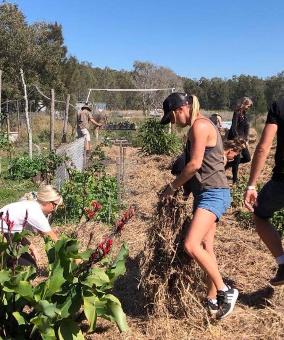 Organic Garden Work